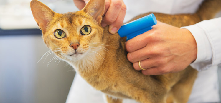 Microchipping for pets in Glasgow