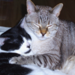 Five things owners of elderly cats should look out for