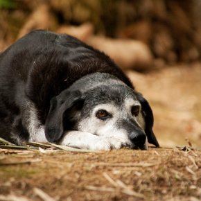 Five things to look out for in older dogs