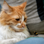 How to treat a cat that's been stung by a bee