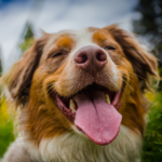 Learn how to remove a tick from your dog safely