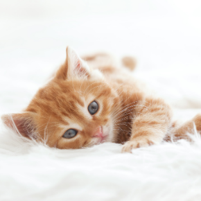Kitten care advice from the team at Avenues Vets