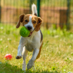 Share your pet stories with Avenues Vets on social media