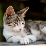3 important summer disease checks for cats in Lanarkshire