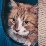 How to find the right cat sitter in Lanarkshire