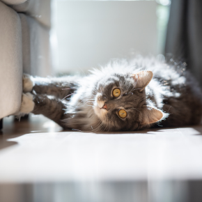 10 truths all cat owners will understand